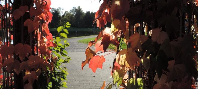 Bunter Herbst an den Schwar­zach­t­al­seen
